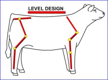 British White Cattle Correct Structure Illustrated